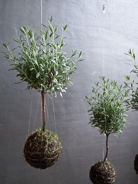 kokedama via string gardens